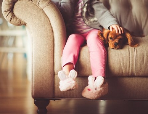 Tenancy Application For A Pet | Know Your Rights As A Landlord